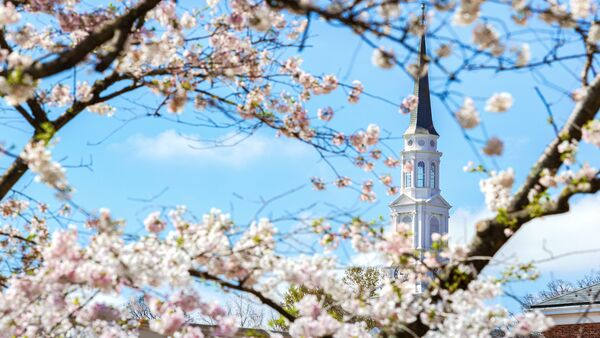 Cherry blossoms over the Memorial Chapel