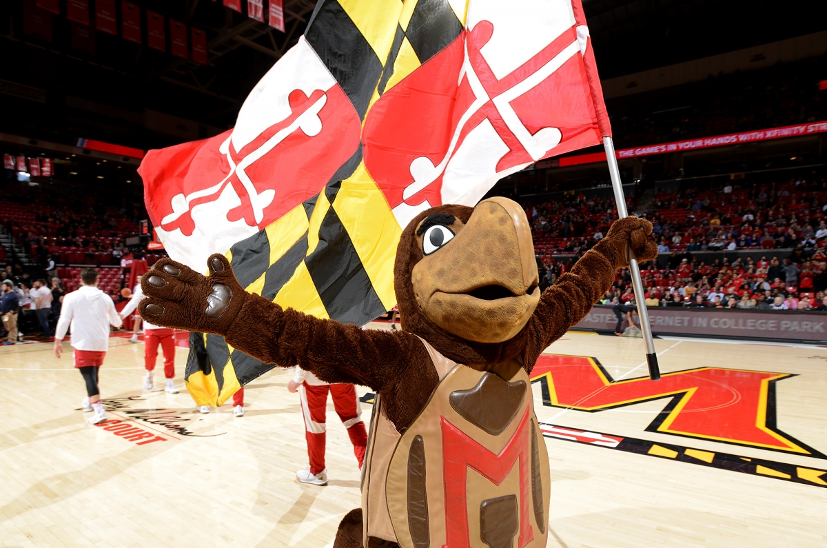 Testudo on the basketball court