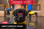 Friday Five, Featuring UMD's Rescue Dogs