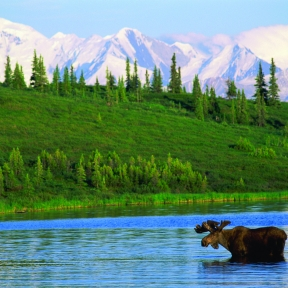 Moose in water with mountains in distance