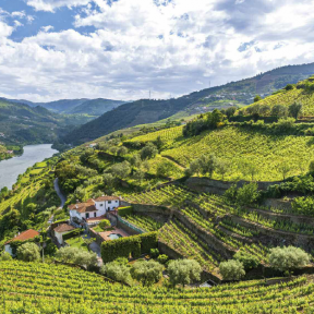 Romance of the Douro River